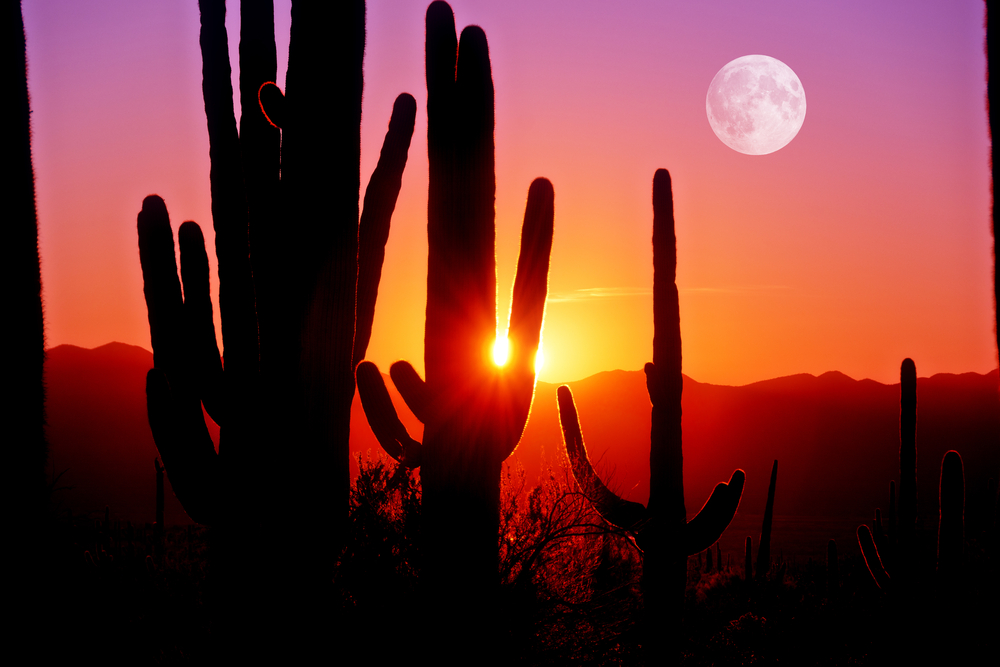 Moving in the Summer: How to Beat the Tucson Heat
